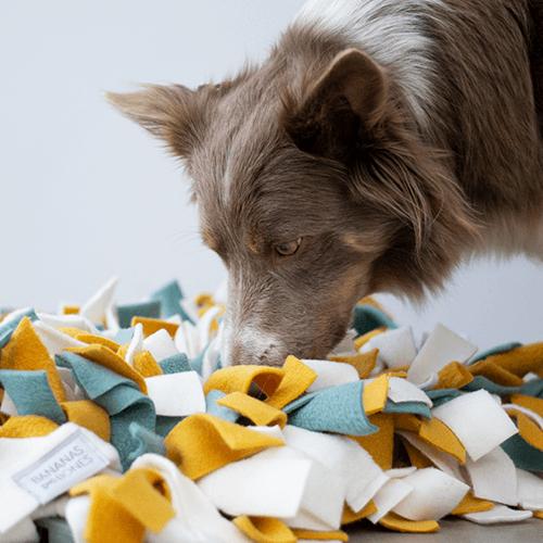 DoggyDenkwerk